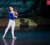 lacul lebedelor balet sibiu 3