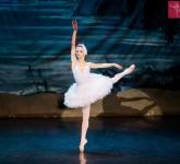 lacul lebedelor balet sibiu 4