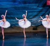 lacul lebedelor balet sibiu 6