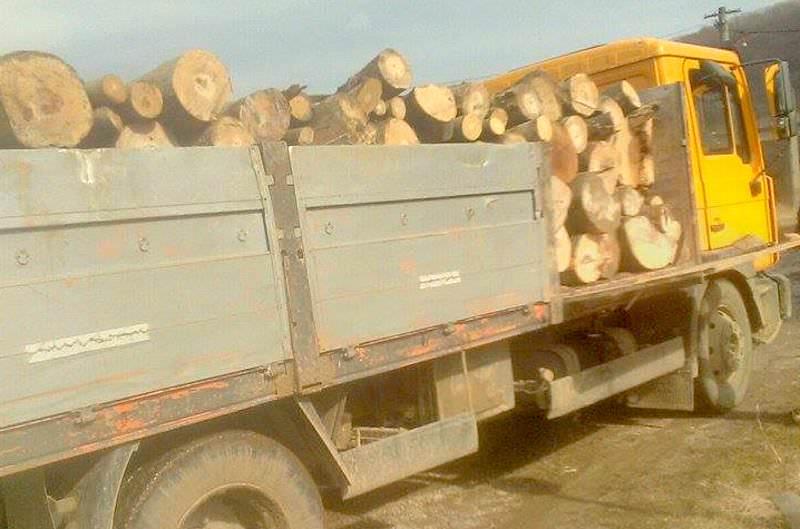 hoti de lemne 2