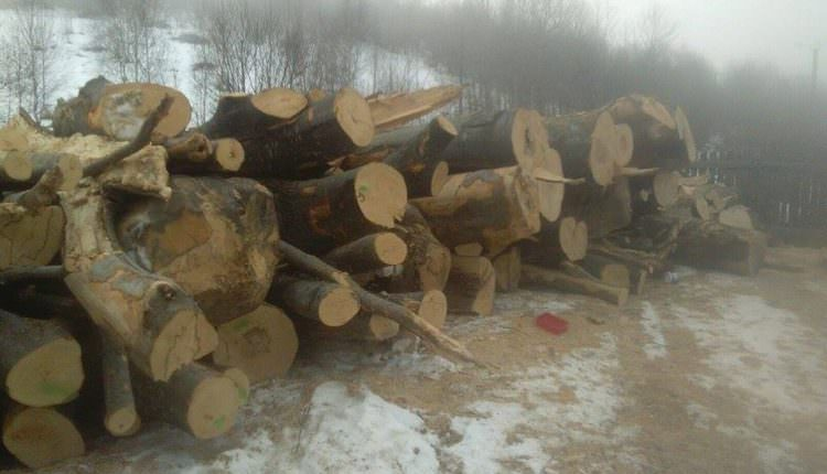 FOTO – Nereguli găsite de poliție la comercianții de lemne din Sălişte, Tilişca şi Poiana Sibiului