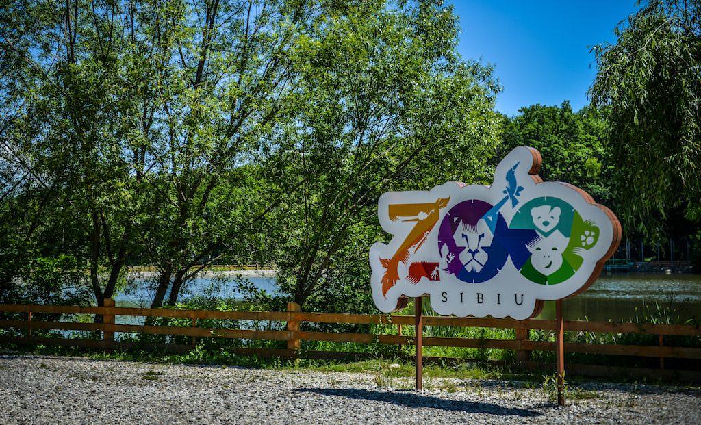 Zoo 17