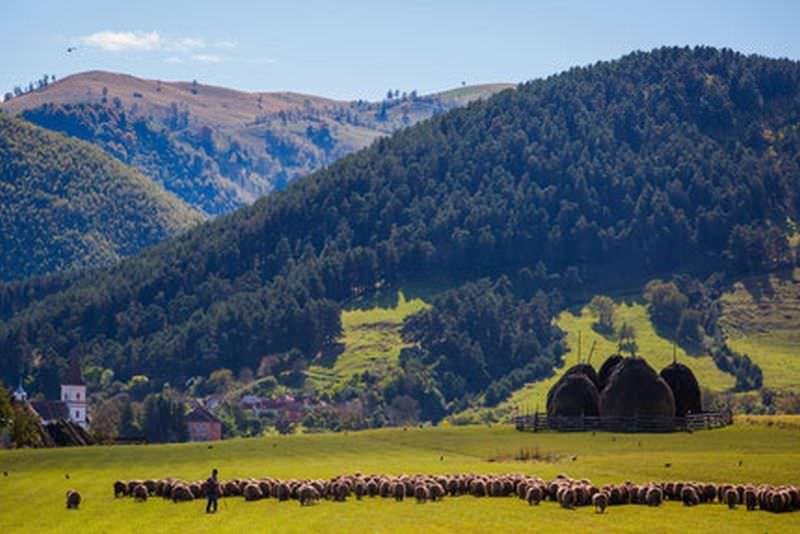 the sheep cheese route marginimea sibiului