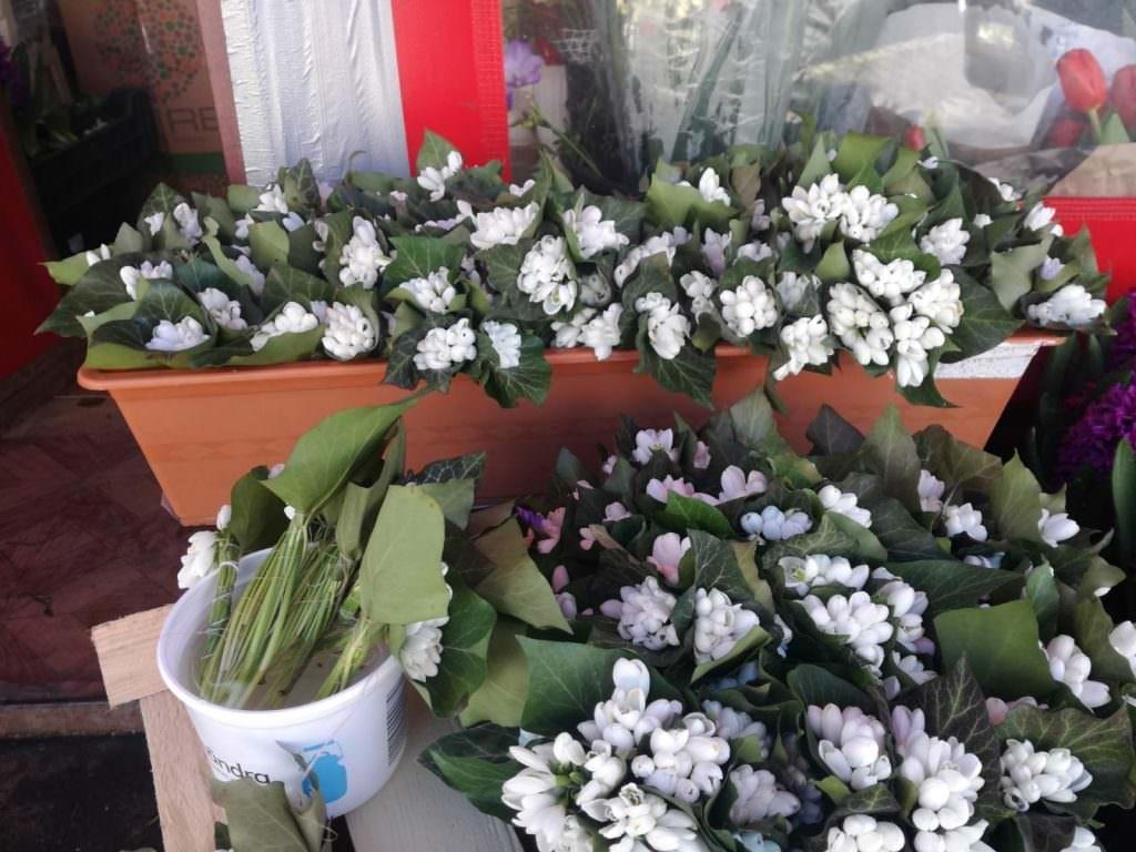 8 martie flori 16