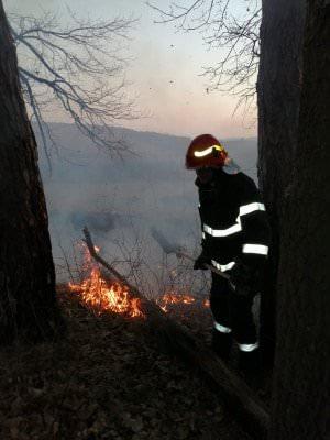 incendii vegetatie 1