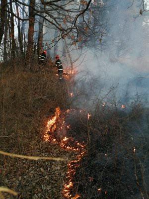incendii vegetatie 3