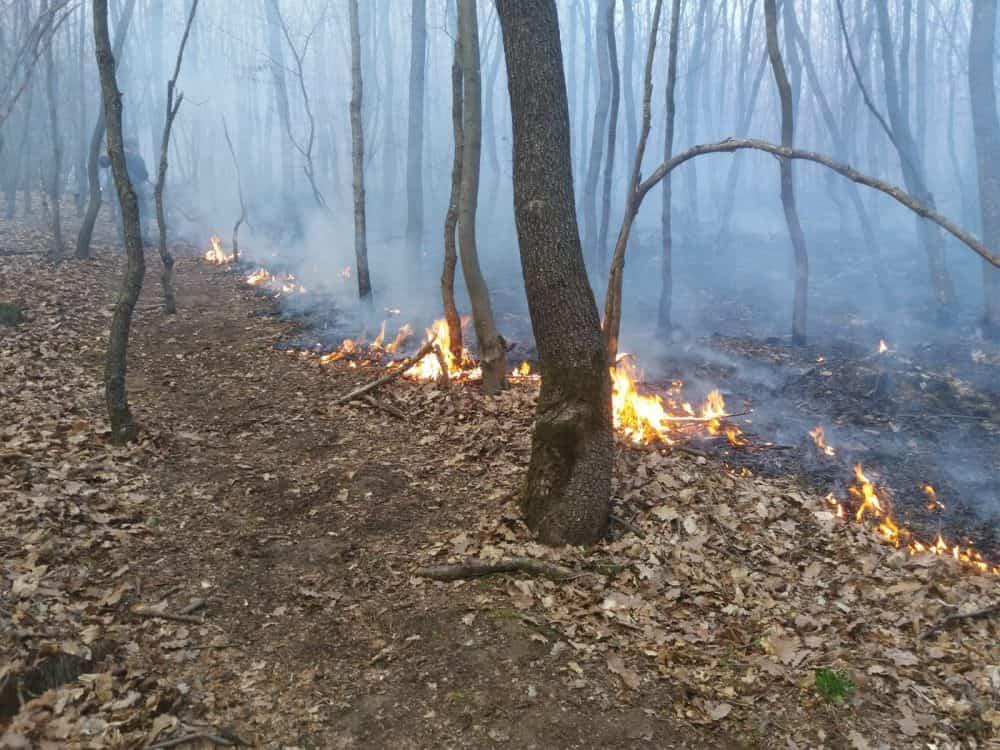 incendiu vegetatie 2