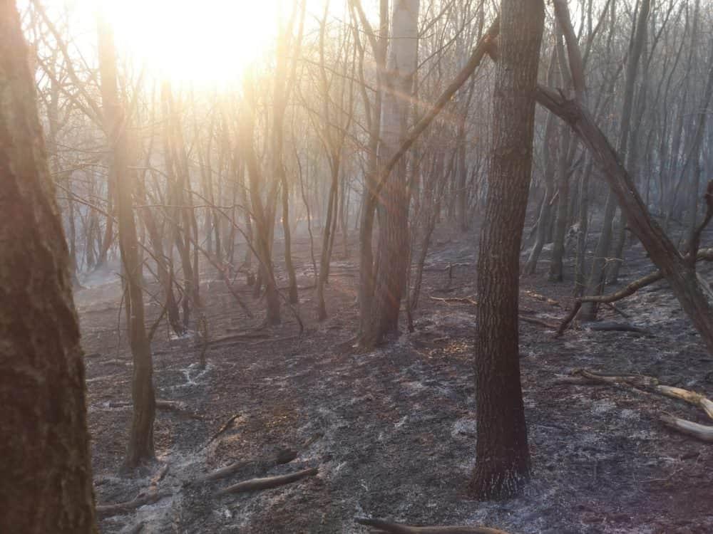 incendiu vegetatie 6