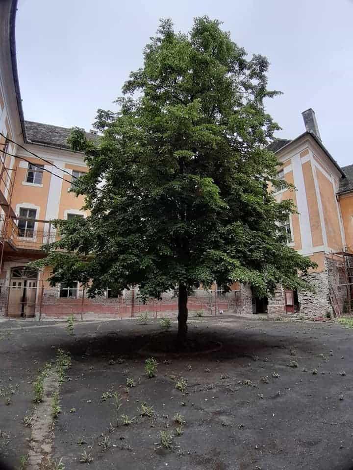 pedagogic 4