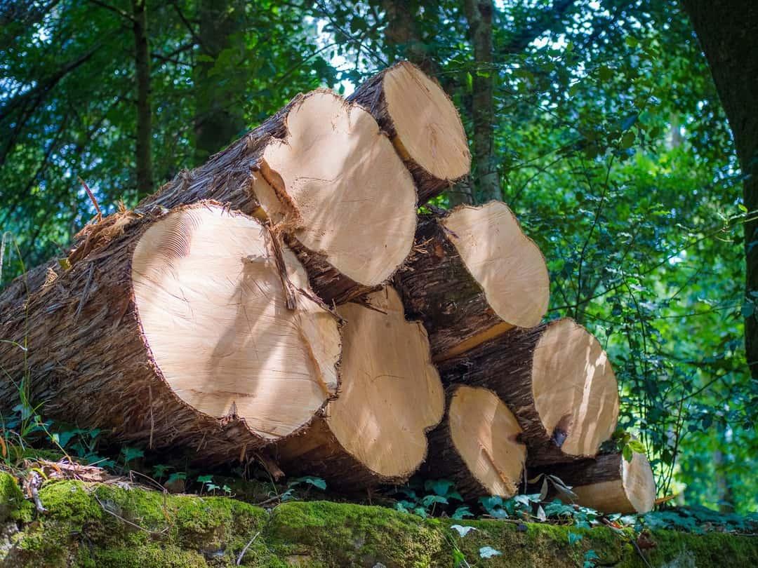 2 lemn ardere buna centrale seminee sobe