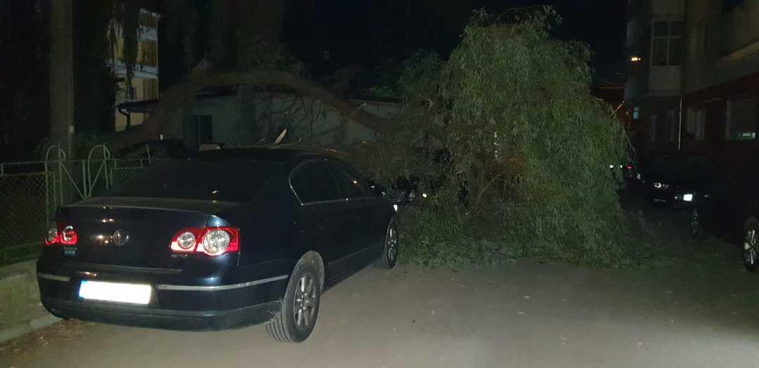 copac rupt masina