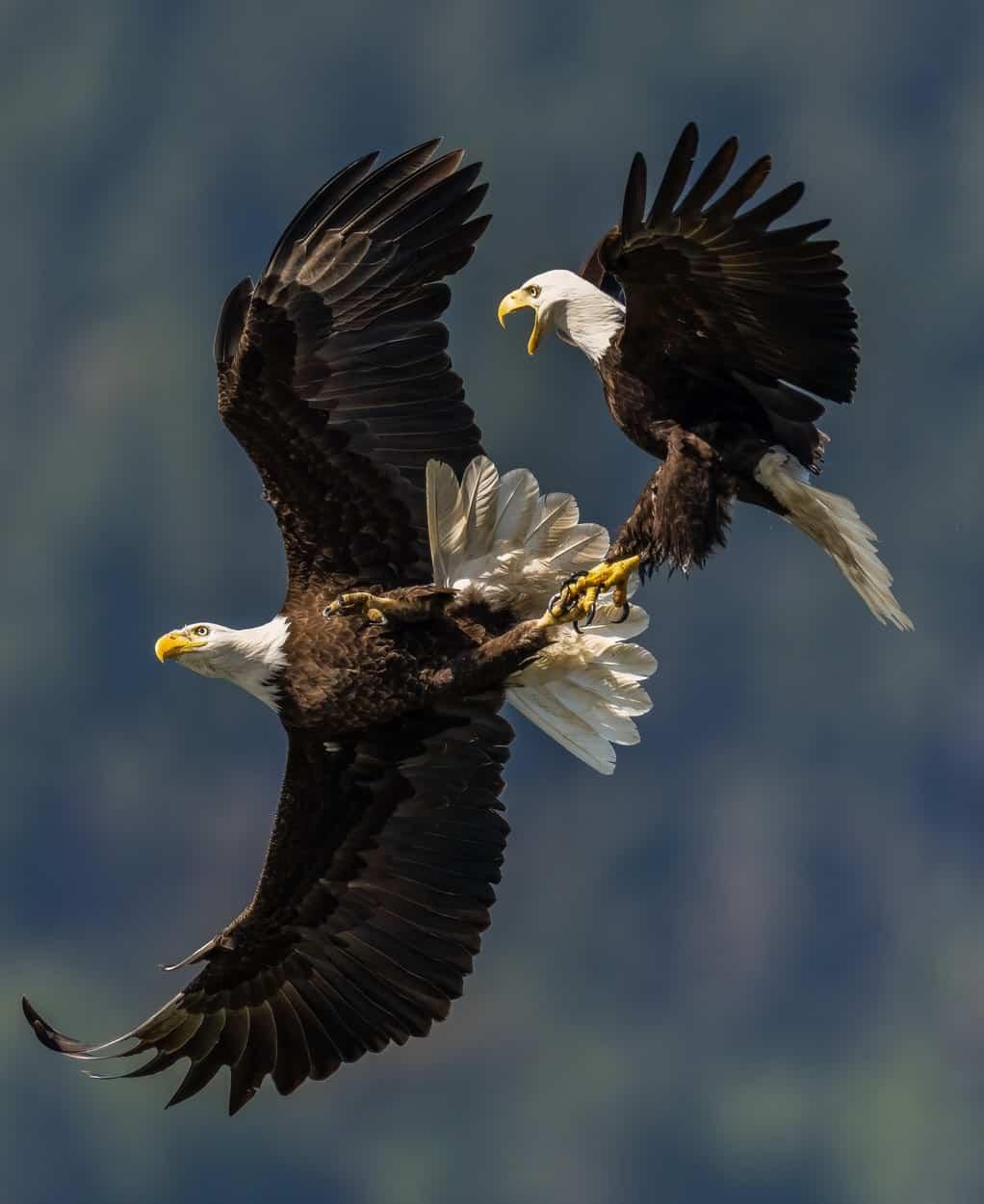 vulturi2