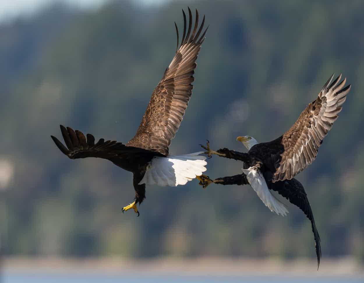 vulturi3