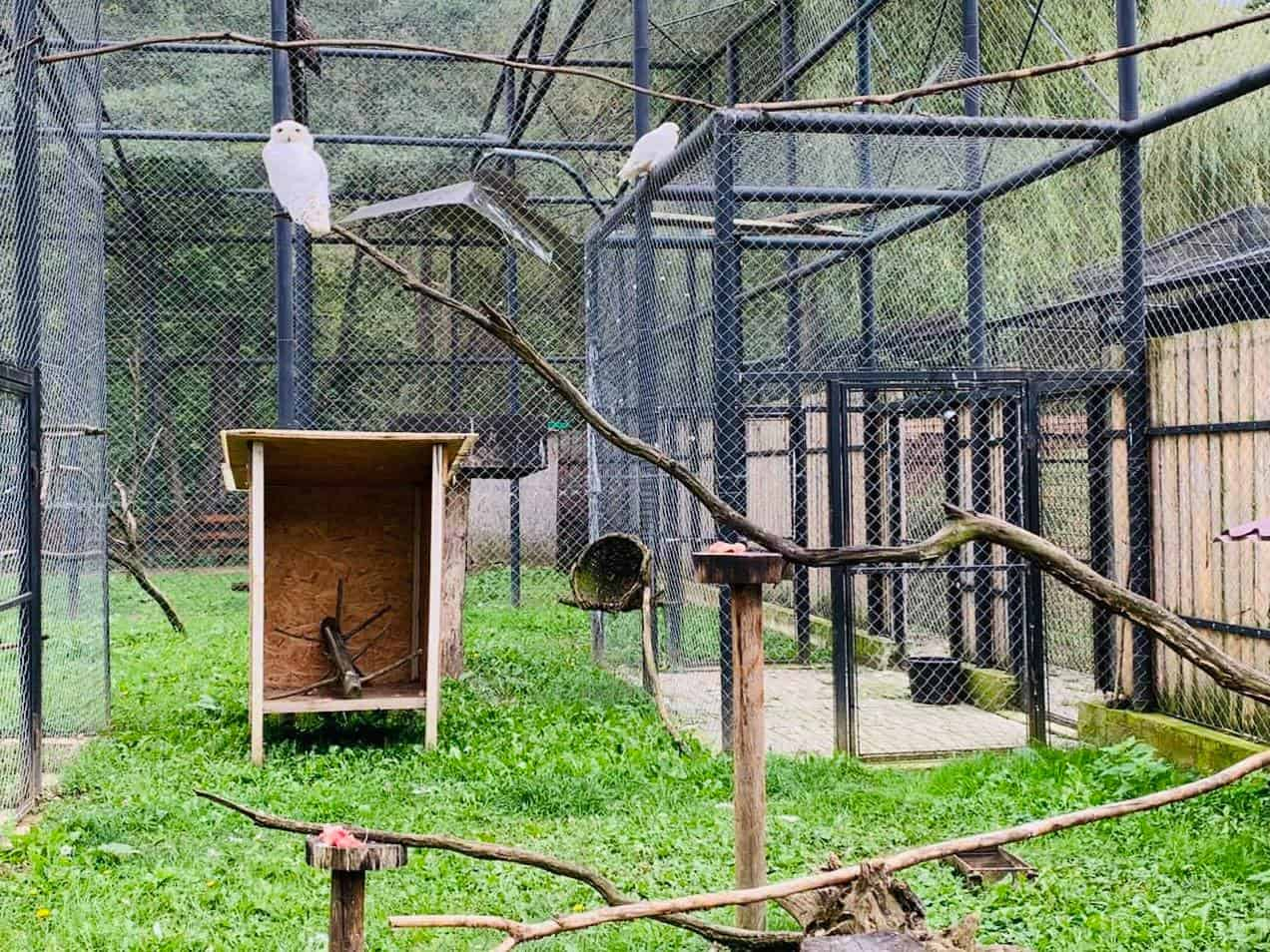 zoo sibiu bufnita