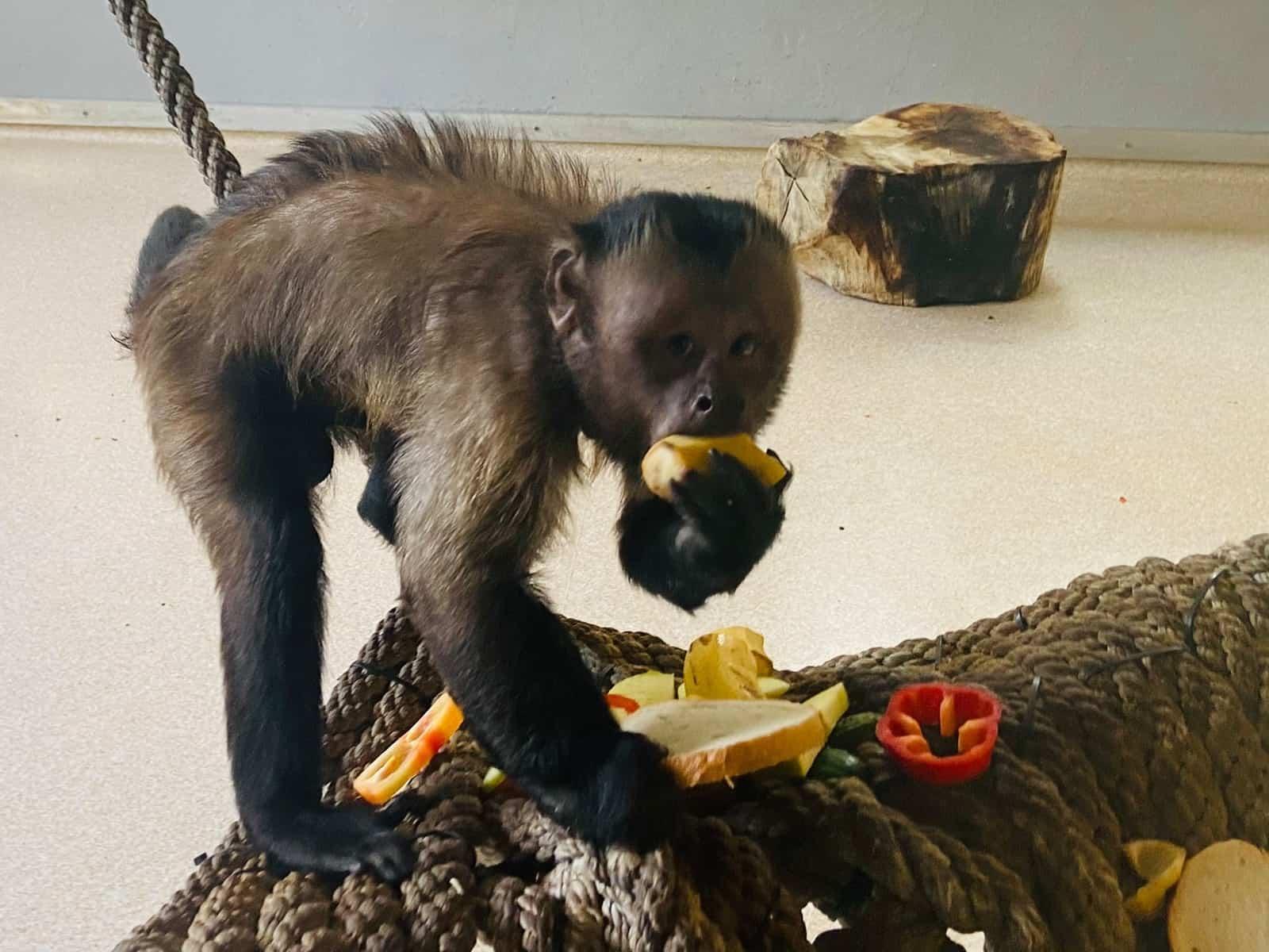 zoo sibiu maimuta